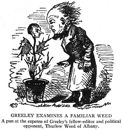 Greeley Examines a Familiar Weed